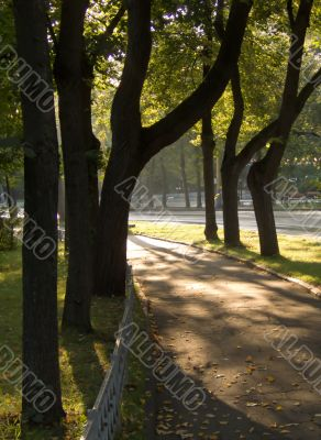 Sunshine in a morning park