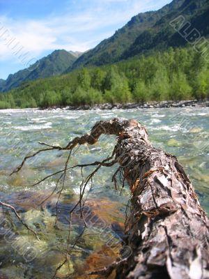 root under stream