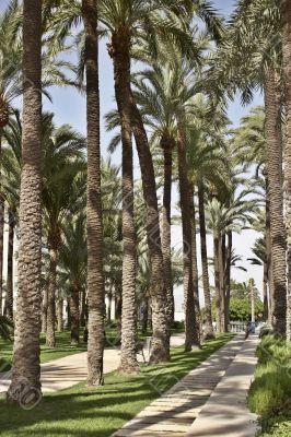 In city park Santa Pola