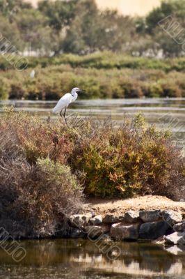 Heron In national park Salinas