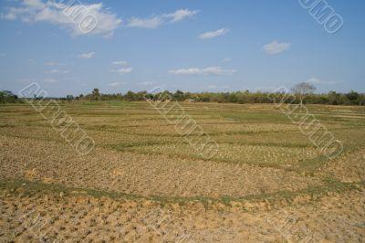 open field,  india