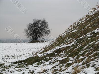 Tree near a snow-bound burial mound