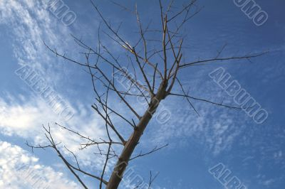 Withered Branches under Winter Sky