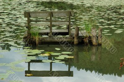 Water lilies pond reflection