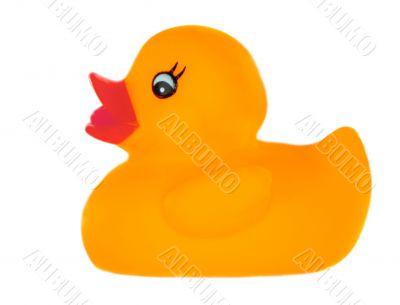 Orange plastic duck