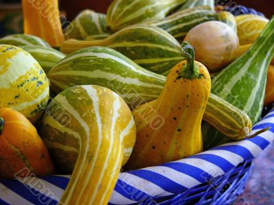ornamental squashes