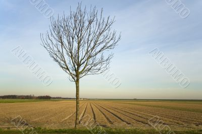 tree before agriculture land