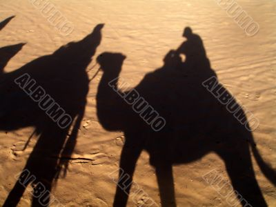 the shadow from camels
