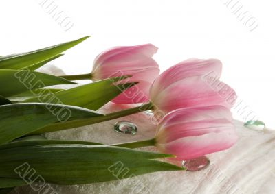 Pink tulips on white towel. SPA composition