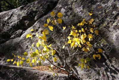 Lichen & moss & aspen leaves