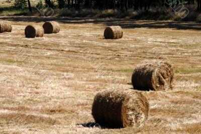 Fall Hay Bale