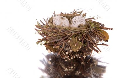 Little bird nest with eggs