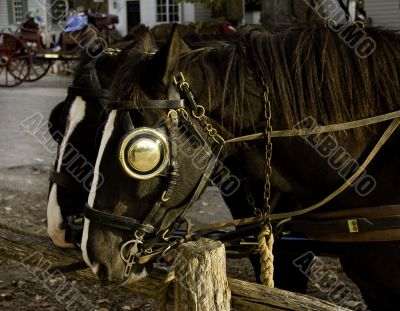 Pair of horses at rest