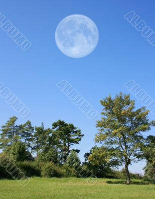Trees with Moon