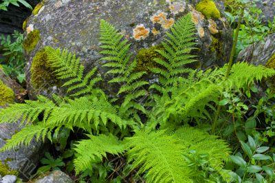 Plants among the stones