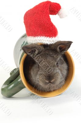 small grey rabbit into the cup and red hat above