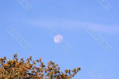 DAYTIME MOON OVER AUTUMN TREES