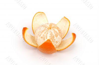 fruits ripe orange on white