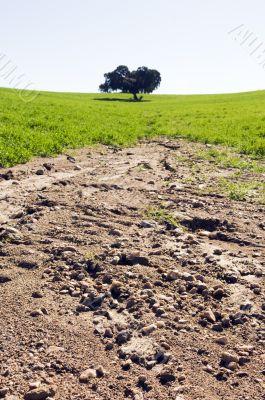 Eroded field