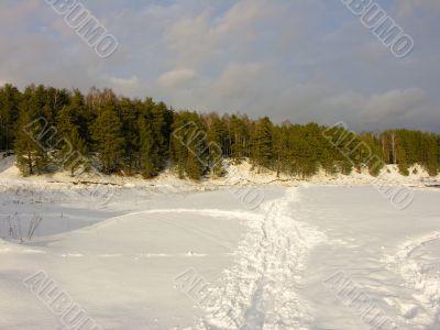 Pines road snow sky