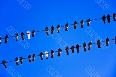 picture of the pigeons