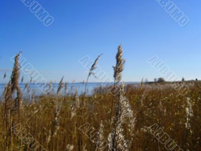 View to the sea through reed