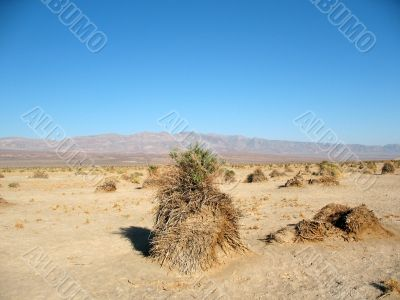 Devil`s Corn Field, Death Valley, California