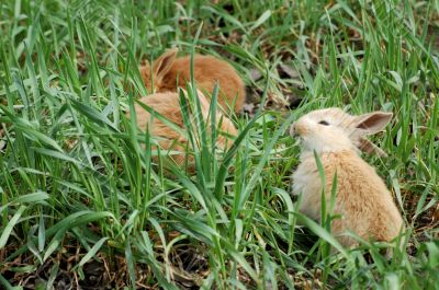 three small red rabbit eating on green meadow