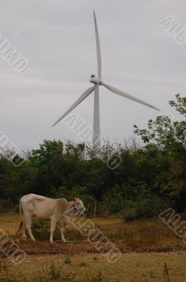 cow and turbine