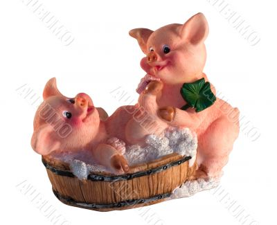 Two pigs wash in tub