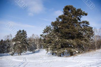 classical winter landscape