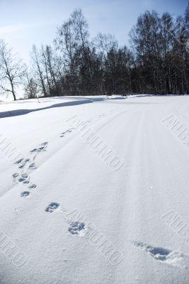 traces animal