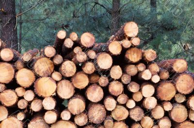 Stacked timber logs