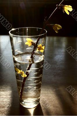 branch in glass