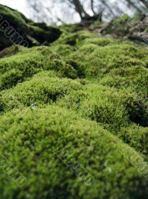 Moss.