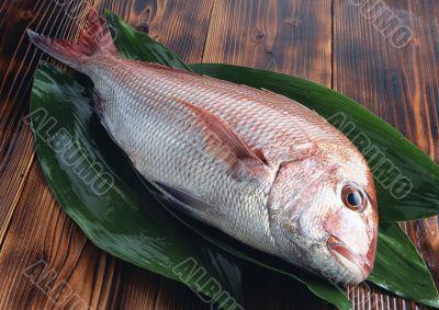 Freshness fish