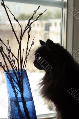 Thoughtful cat pending spring on a window sill
