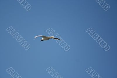 gull in the blue sky