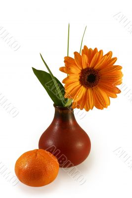 composition with gerber daisy in vase