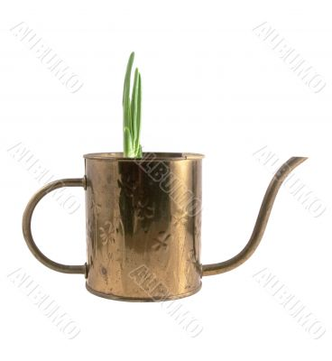 Watering Can with Sprouting Bulb