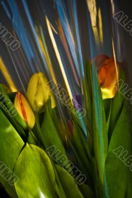 tulips in plastic wrapping