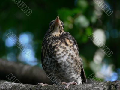Bird. Nestling.