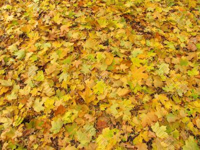 falling off leaves