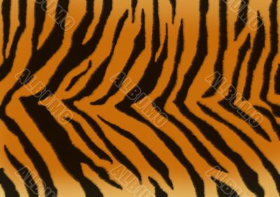 Texture - a fluffy skin of a tiger