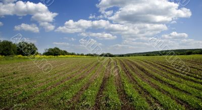 Agricultural sow field and blue sky in country