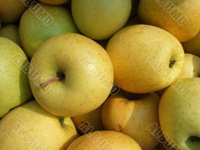 Harvest Fresh Organic Orchard Apples