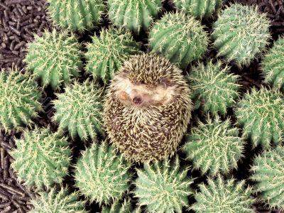 crew-cut in the cactuses