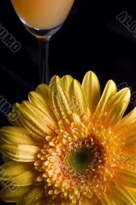 Yellow gerbera and wineglass with juice