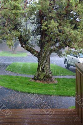 Thunderstorm, rain downpour