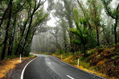 Wet Forest Road